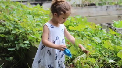 Let's Dig In! Gardening with Young Children to Enhance their Development